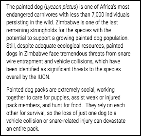 Crowdfunding description - Painted Dogs 1