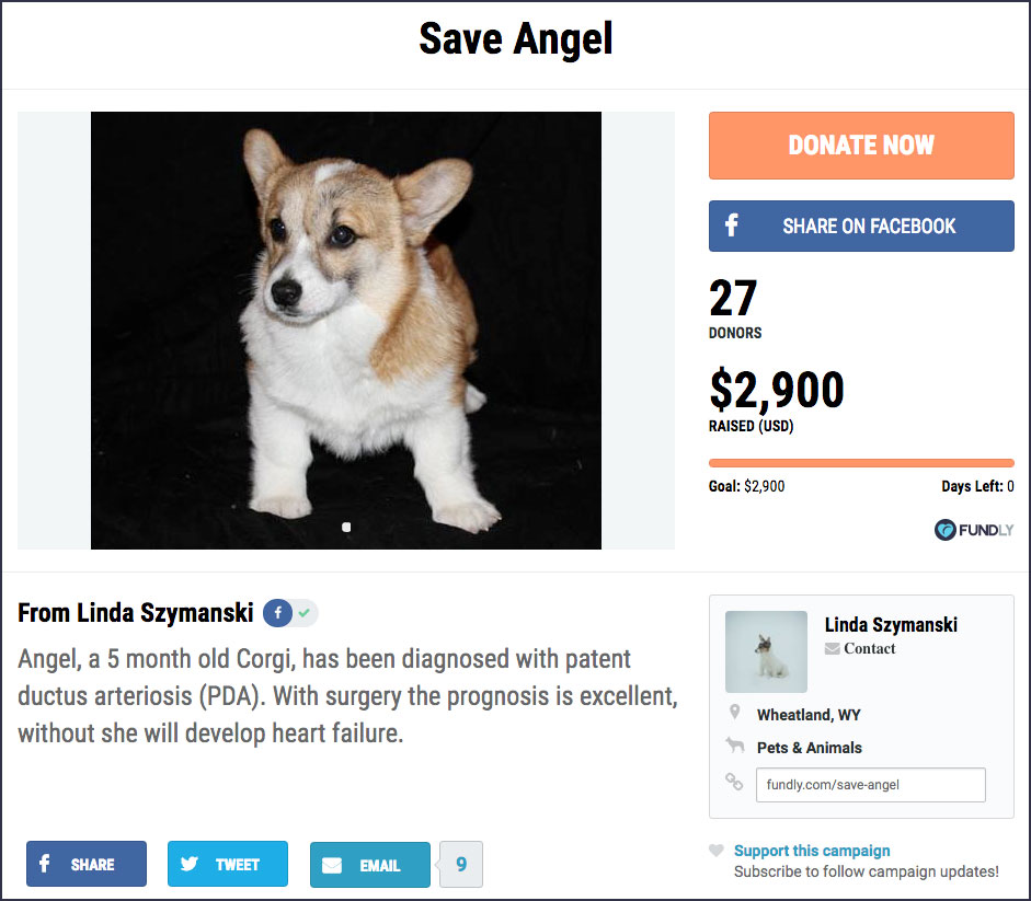 Fundraising Campaign - Animal Surgery
