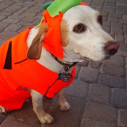 Host a Howl-O-Ween party as a fundraising idea for pets and animals.