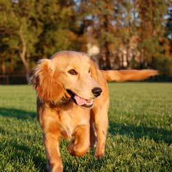 Turn walking your pup into a family fundraising idea!